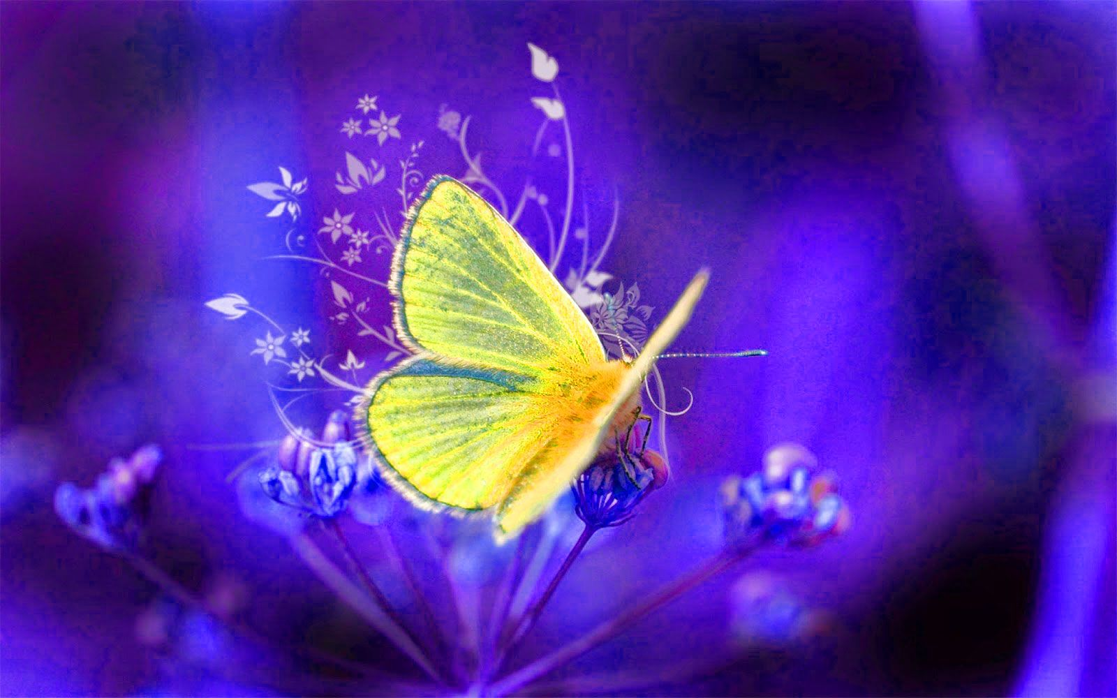 Butterfly Wtsp Dp Pics Butterfly Wtsp Dp Images Butterfly Wtsp Dp Photo Hd Download Dp Photos Whatsapp Dp Images Photo