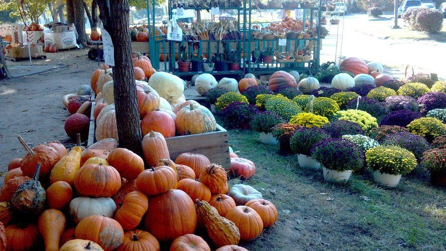 Amish market hughesville maryland amish market things