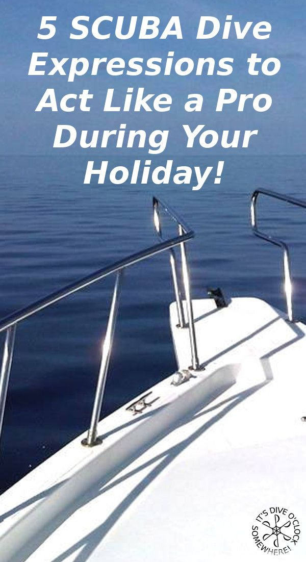 5 SCUBA Dive Expressions To Act Like A Pro On Your Holiday