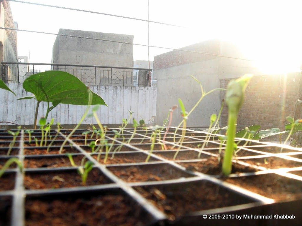 Seed Germination Tips