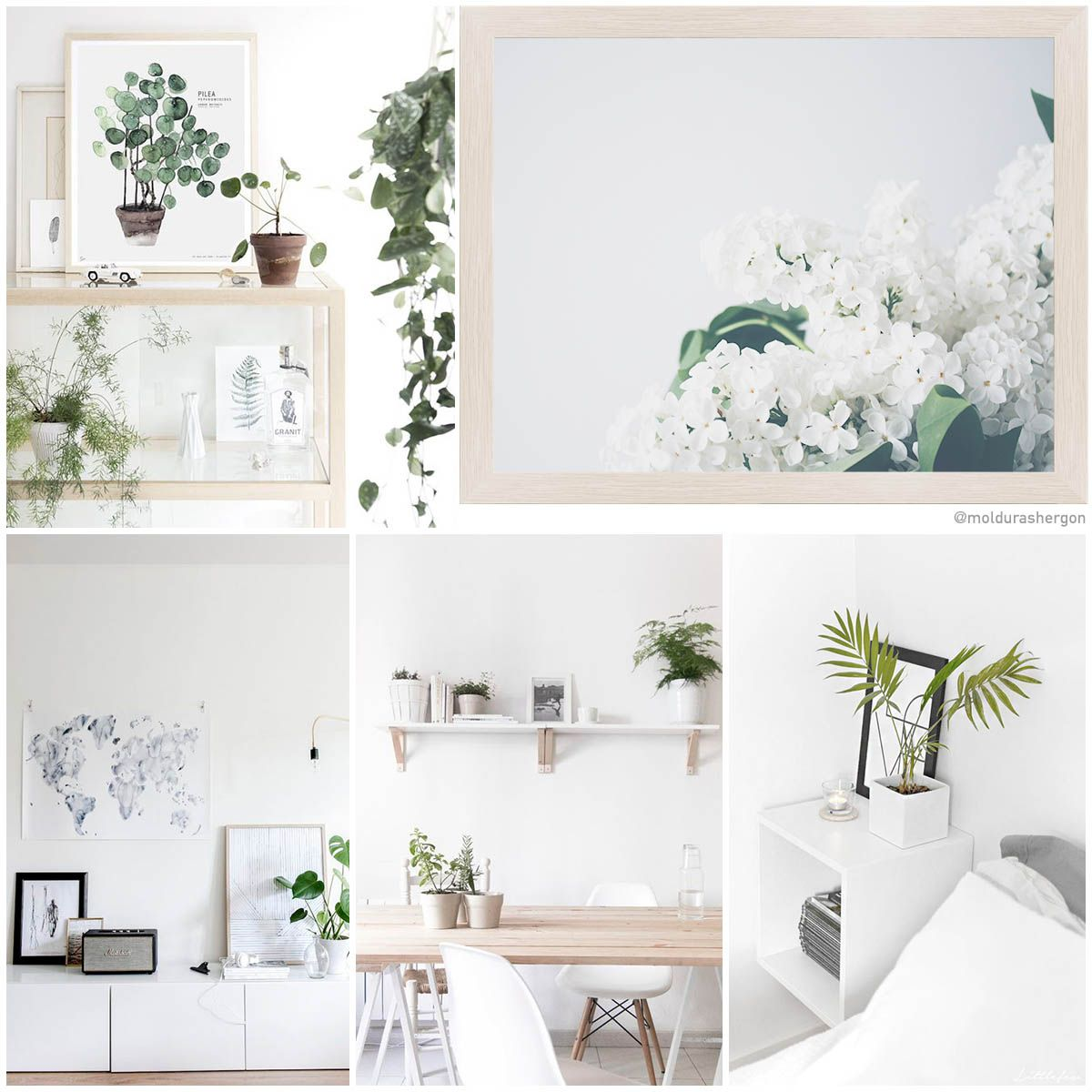 White and plants. Moldura de madera en roble claro (ref. 823-Y32)