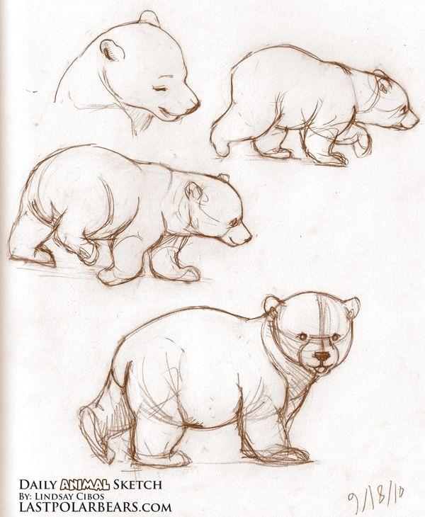Polar Bear Cubs Drawings