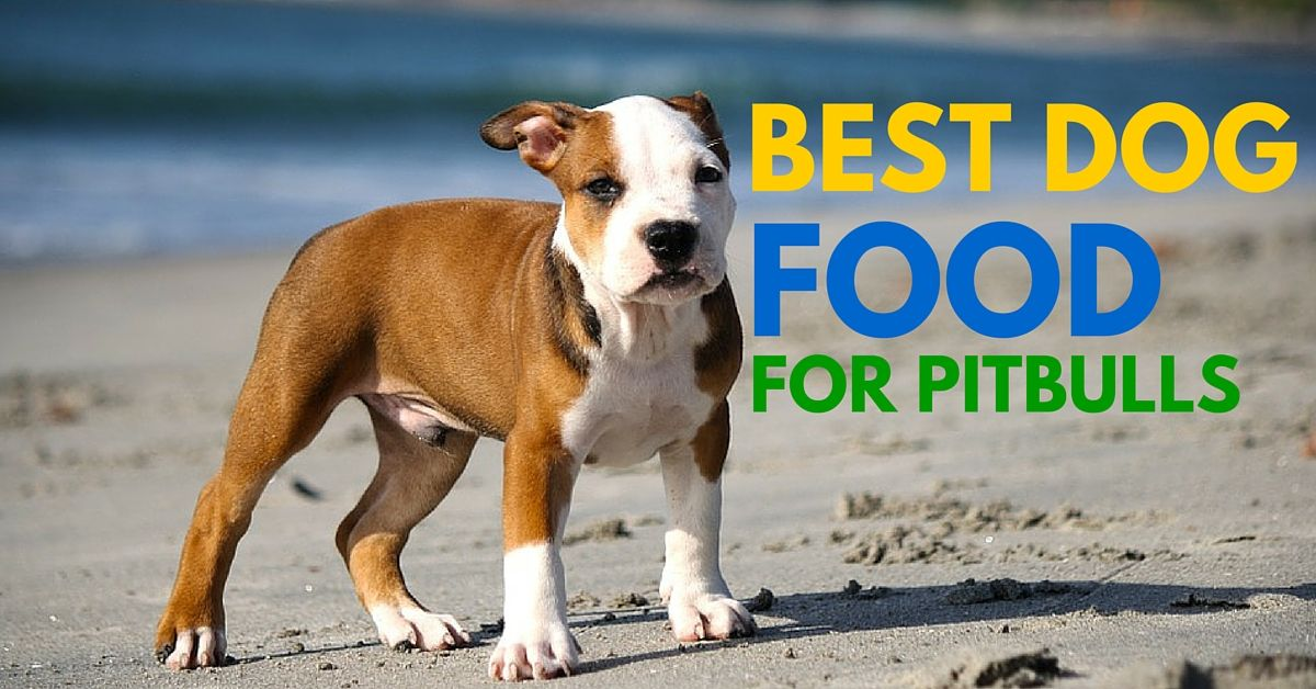 The Best Dog Food For Pitbulls Who Suffer From Allergies Should