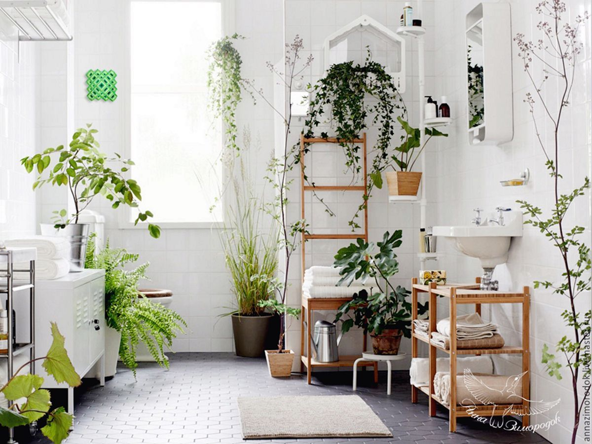 10 Incredible Indoor Plants Ideas For