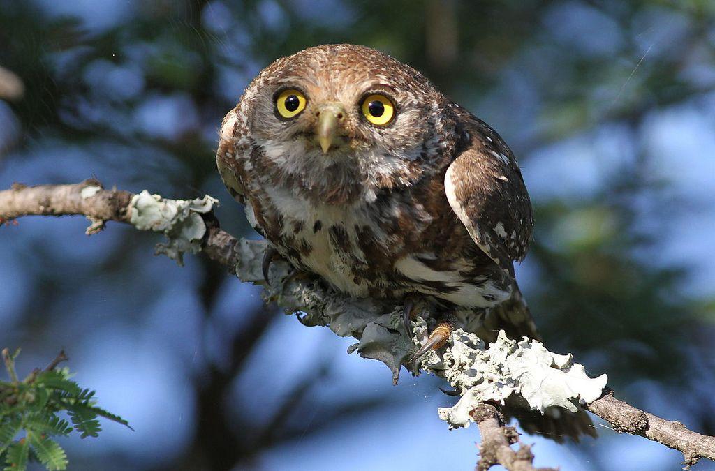 More irresistible owls here: http://ift.tt/JQ5da3 Photo source (http://ift.tt/1zE6XLO)