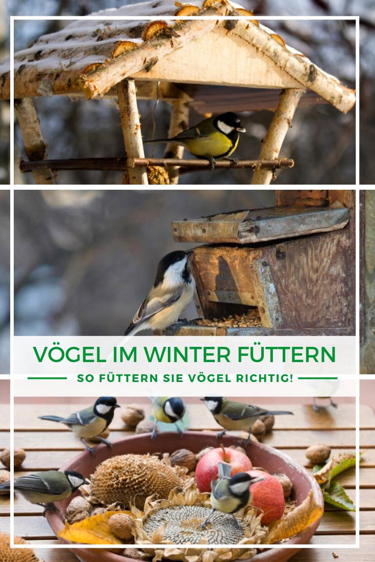 Vogel Im Winter Futtern So Futtern Sie Vogel Richtig In 2021 Vogel Im Winter Winter Tiere