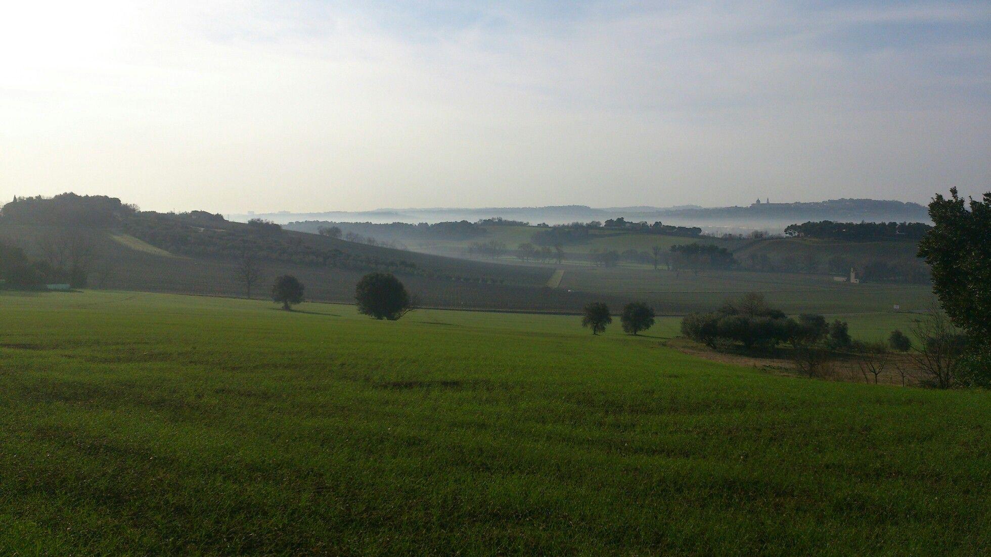 Le Marche countryside