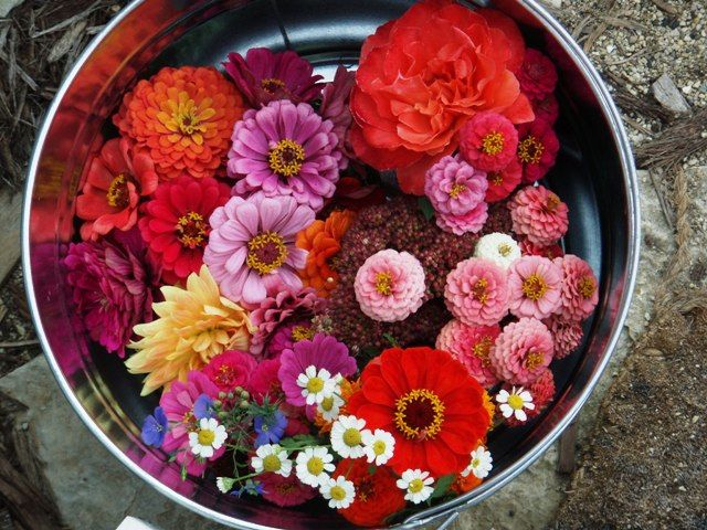 Flower Bucket   Flower Bucket   Flower bucket, Beautiful ...