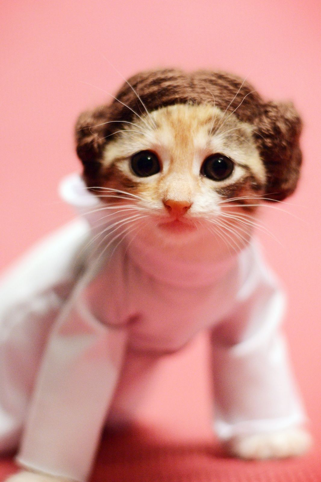 Cats Game Of Thrones Costumes Star Wars Funny Animals | Pinterest ...