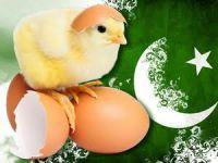 Pakistan'dan tavuk civcivi ithalatı