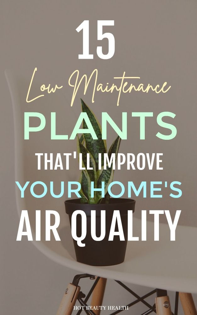 Want to purify the air in your home? According to NASA, these 15 hard to kill indoor houseplants cleanses the air in any area of your home (bedrooms, offices, bathroom, etc). From Boston Ferns to Peace Lily plants, add any of these for a healthier home. #lowmaintenanceplants #plants #planttipsandtricks