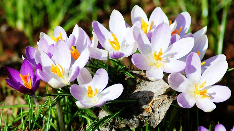 New Spring Flowers HD Wallpaper