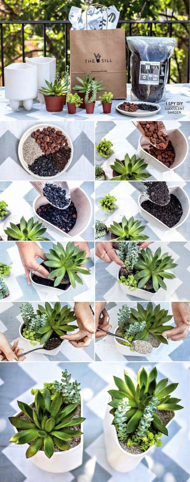 diy succulent garden succulents pinterest pflanzen kaktus terrarium und kaktus. Black Bedroom Furniture Sets. Home Design Ideas