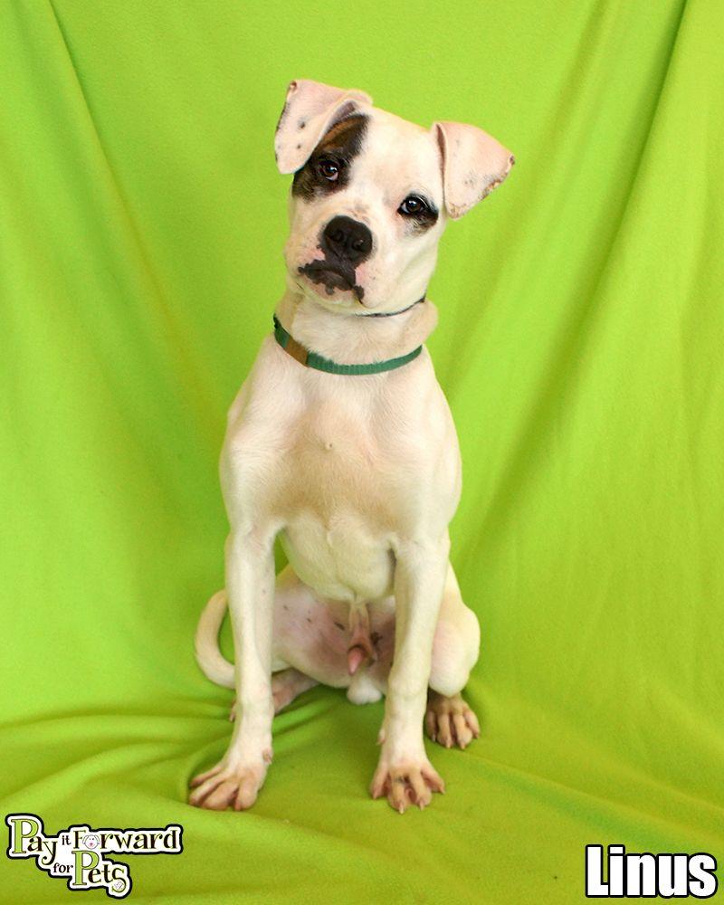 I found Linus on Akron ohio, Dog and Adoption