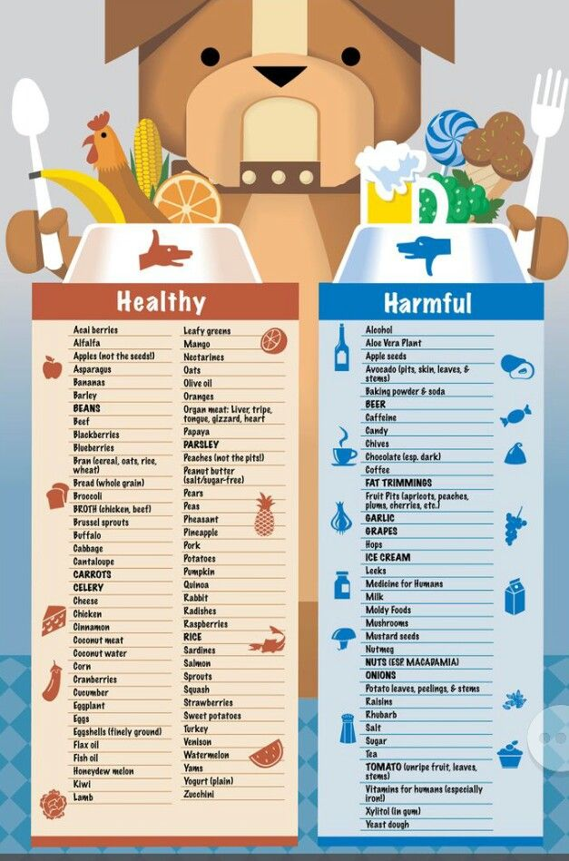 Food Chart Dog Food Recipes Healthy Dogs Homemade Dog Food