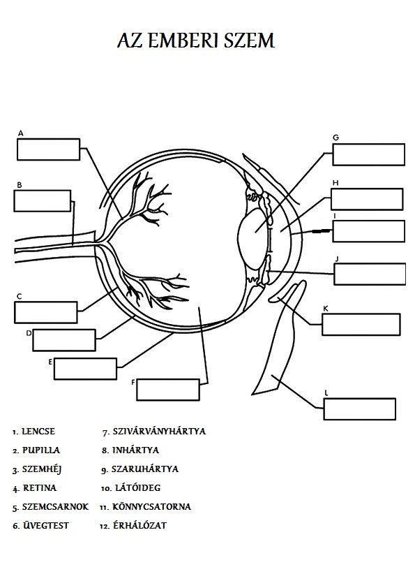 Az emberi szem | Környezetismeret- Biológia- Anatómia | Pinterest