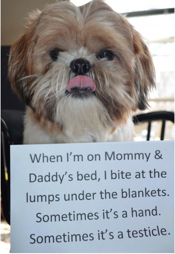 Happy Birthday Labrador Retriever Puppy Post Card Zazzle Co Uk