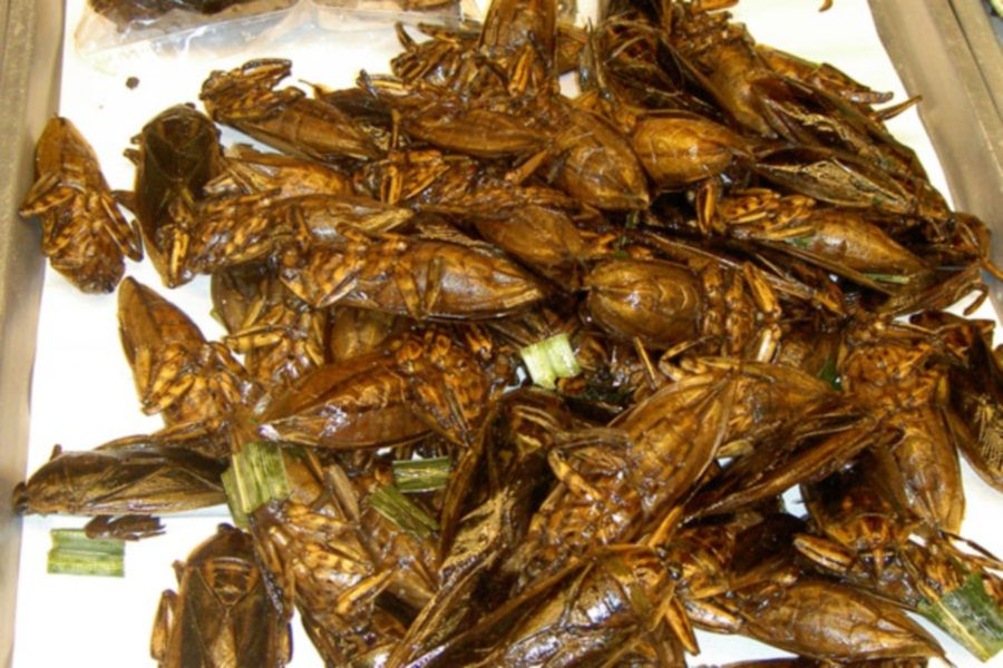 Image result for deep fried cockroaches