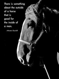 winston churchill quotes about horses - Google Search
