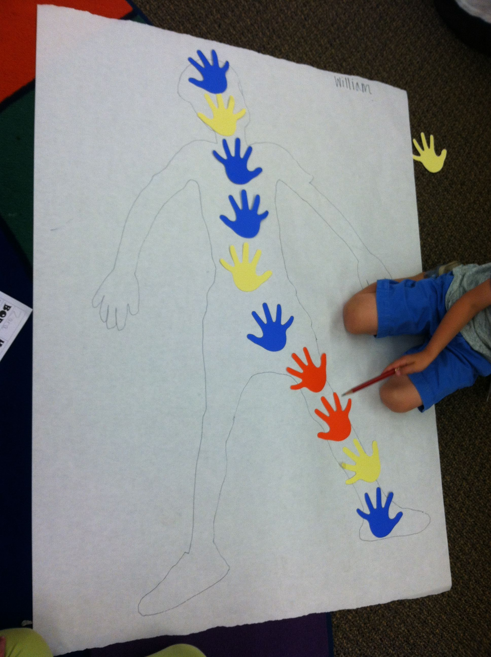 We Traced Our Bo S And Measured Using Hands