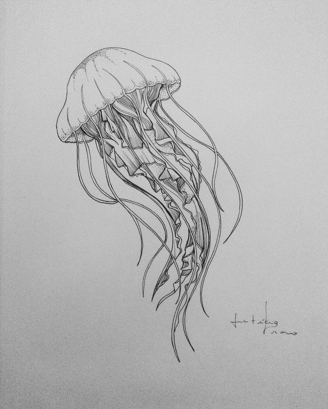 This is a photo of Zany Jellyfish Line Drawing