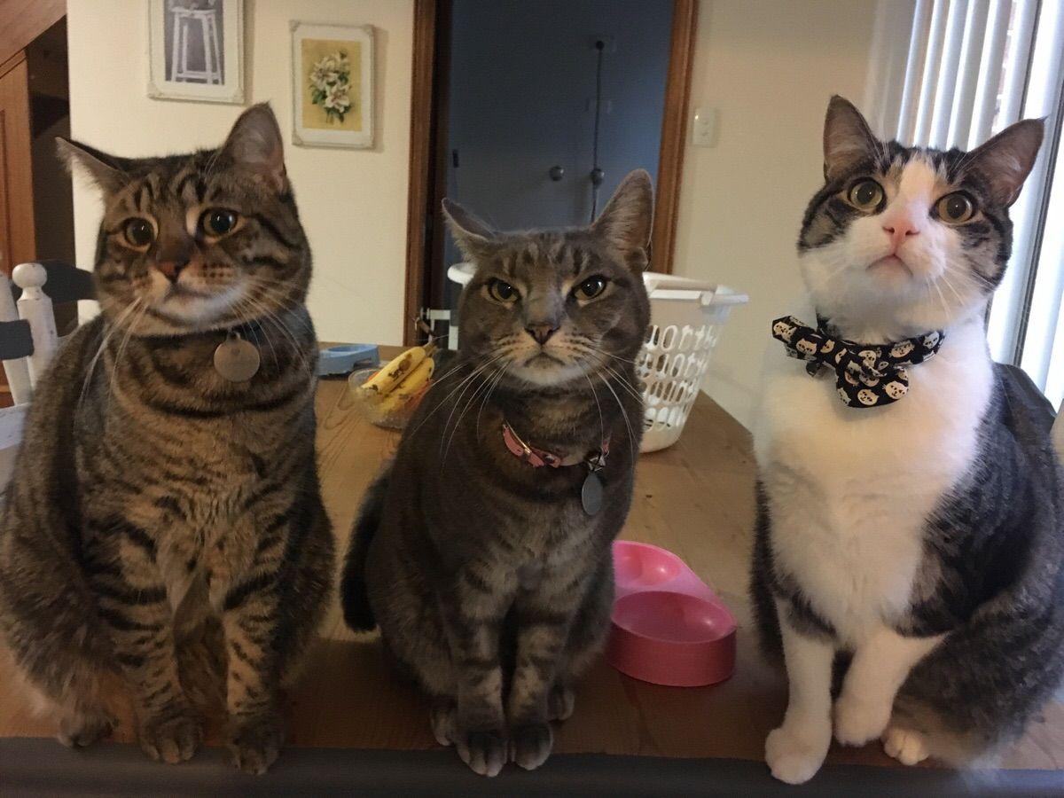 Pin on Beautiful Cute Cat Images