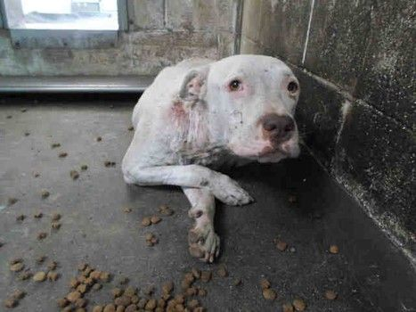 Dog Rescue Needed For Terrified Dog In California Shelter Rescue Dogs Dogs Pets