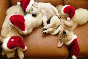 O Natal é tão mágico a ponto de livrar de todo o mal todos os lares e transformar corações. Que essa data seja serena, pacífica e harmoniosa no seu lar. Muita saúde e amor para a sua família. Feliz Natal!