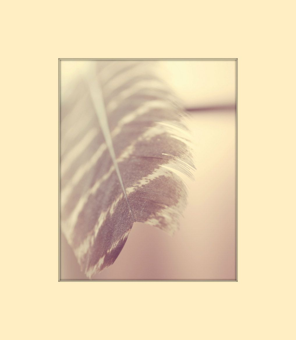 feather photography indie art rose smoke french roast brown cream ...