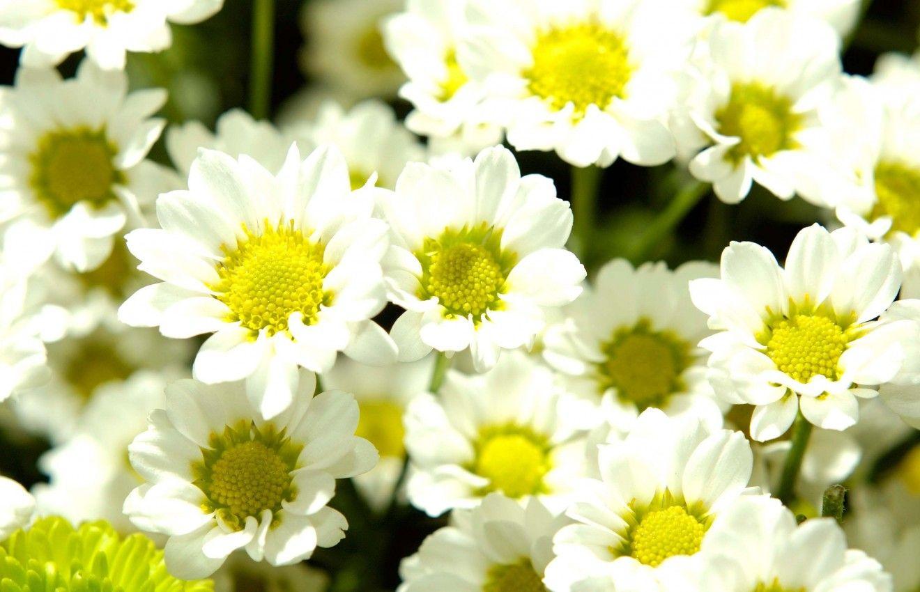 20 خلفية زهور رائعة عالية الدقة مجانا مداد الجليد Beautiful Flowers Images Beautiful Flowers Images Hd Beautiful Flowers Wallpapers