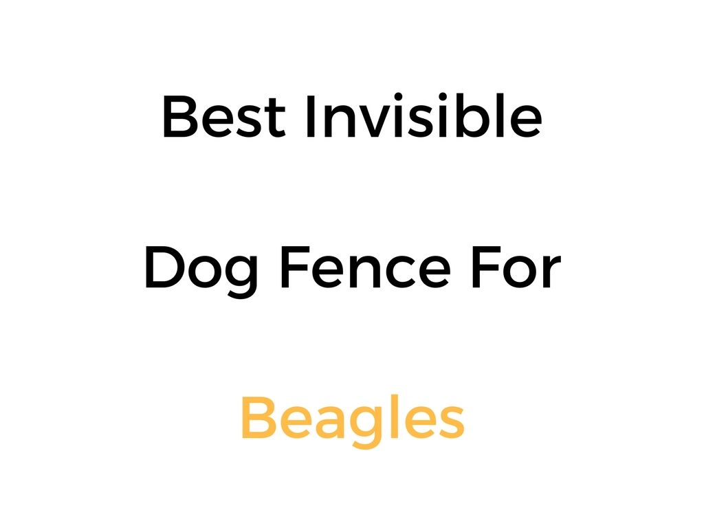 Best Electric Dog Fence For Beagles Invisible In Ground