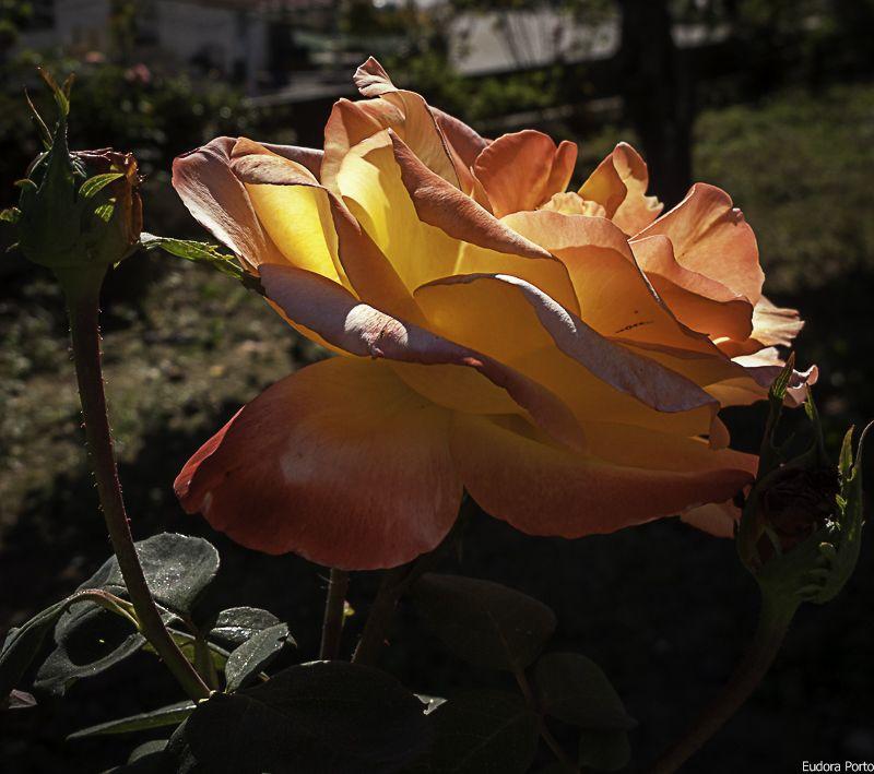 Flores do meu jardim.