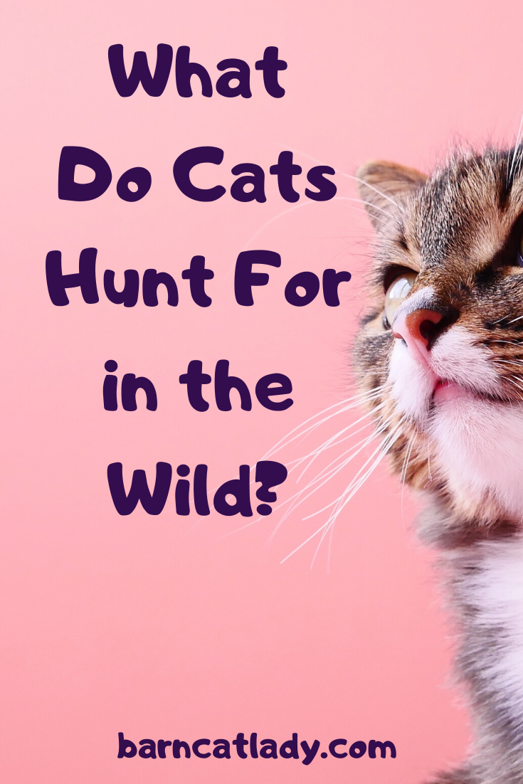 Cat Hunting Cat Predation And Cat Biology Long Post Warning Https Barncatlady Com What Do Cats Hunt For In The Wild Barnca In 2020 Feral Cats Cats Wild Cats