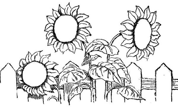 Sun Flower Over the Fence Spring Flower Coloring Page | Color Luna ...