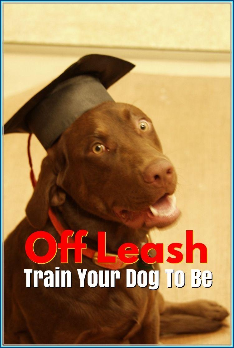 Learning More About Off Leash Dog Training Dog Training Tips And Tricks Off Leash Dog Training Training Your Dog Dog Leash