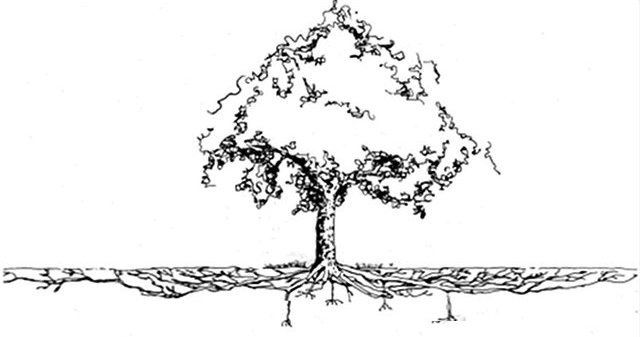 tree root system diagram - google search | planter inspiration | tree roots, dogwood trees, tree ... oak tree diagram #11