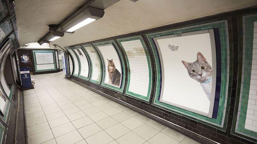 El metro de Londres sustituye la publicidad de las galerías con fotos de gatitos que se pueden adoptar - http://www.creativosonline.org/blog/metro-londres-sustituye-la-publicidad-las-galerias-fotos-gatitos-se-pueden-adoptar.html