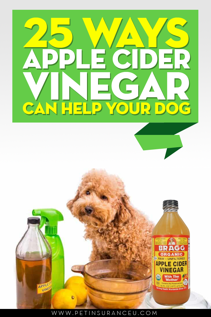 8 Proven Benefits of Apple Cider Vinegar for Dogs | CANIDAE®