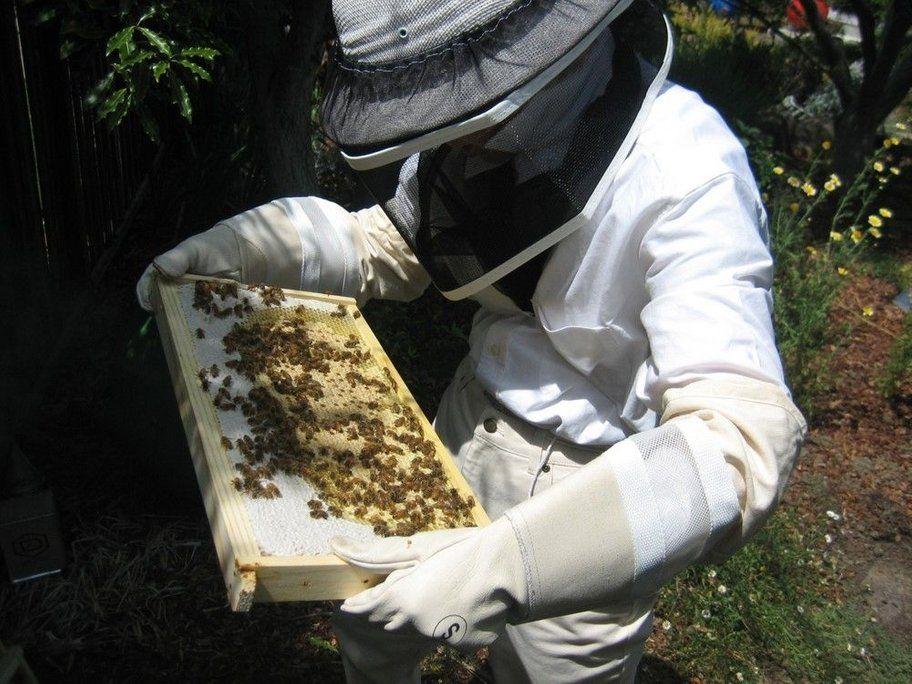 Backyard Bees in the 'burbs | Backyard, The 'burbs, Bee