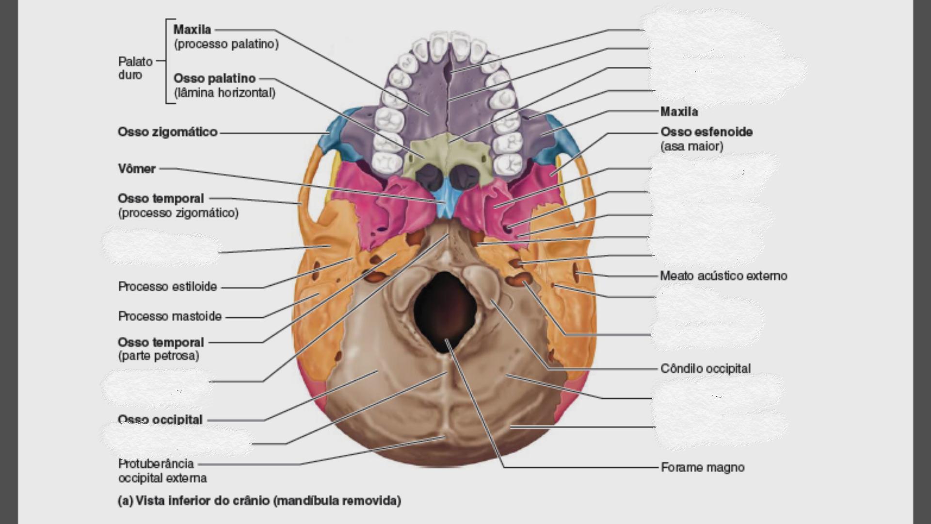 Pin by Ludovina Rebelo on anatomia 8 | Pinterest