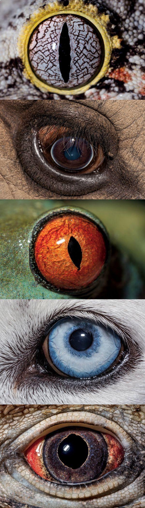 The strange yet beautiful science behind animal eyes | Ojos ...