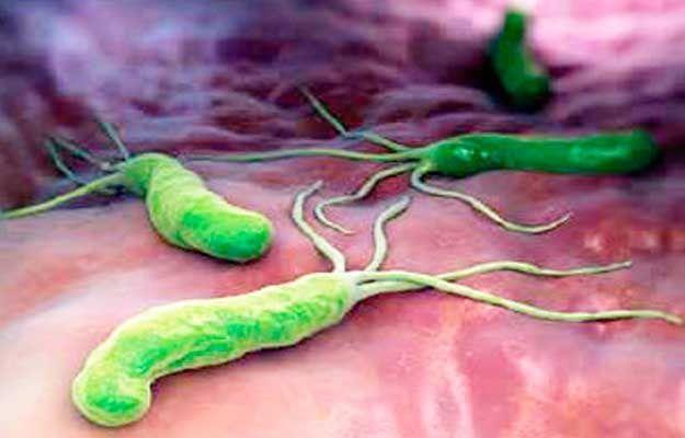 Durante El Proceso Digestivo El Organismo Absorbe Los Nutrientes De Los Alimentos Que Ingerimos Y Los Distribuye Estómago Hinchado Estomago Metodos Naturales