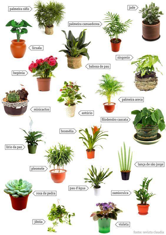 Esp cies de plantas para jardim kactus planting - Plantas venenosas de interior ...