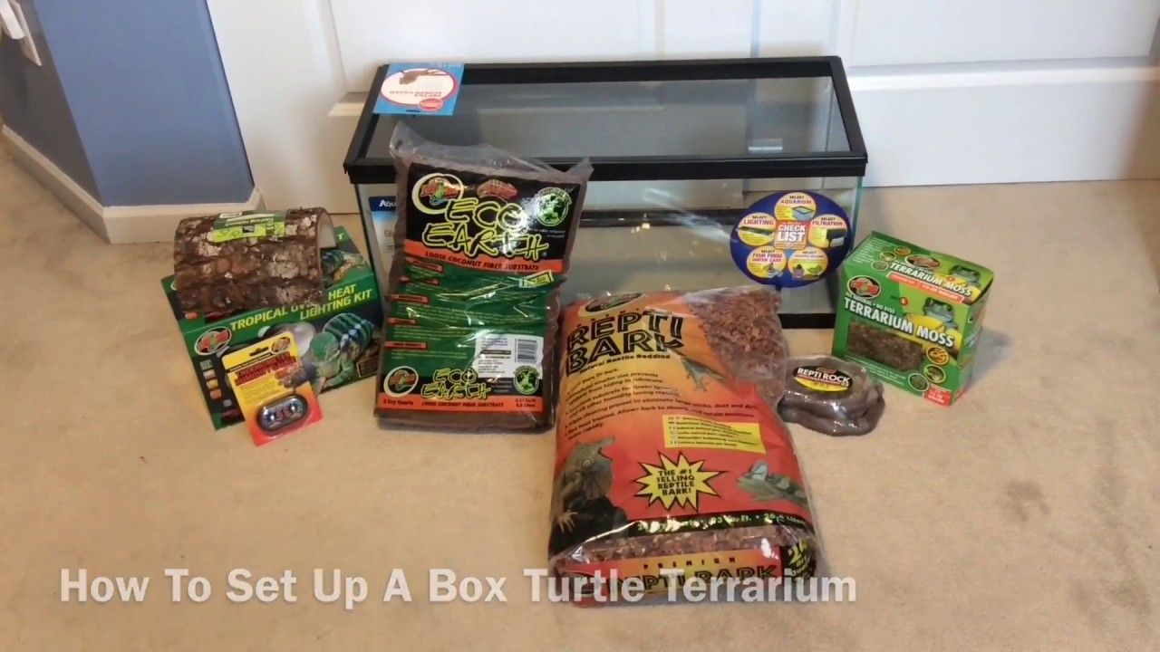 How To Set Up A Box Turtle Terrarium