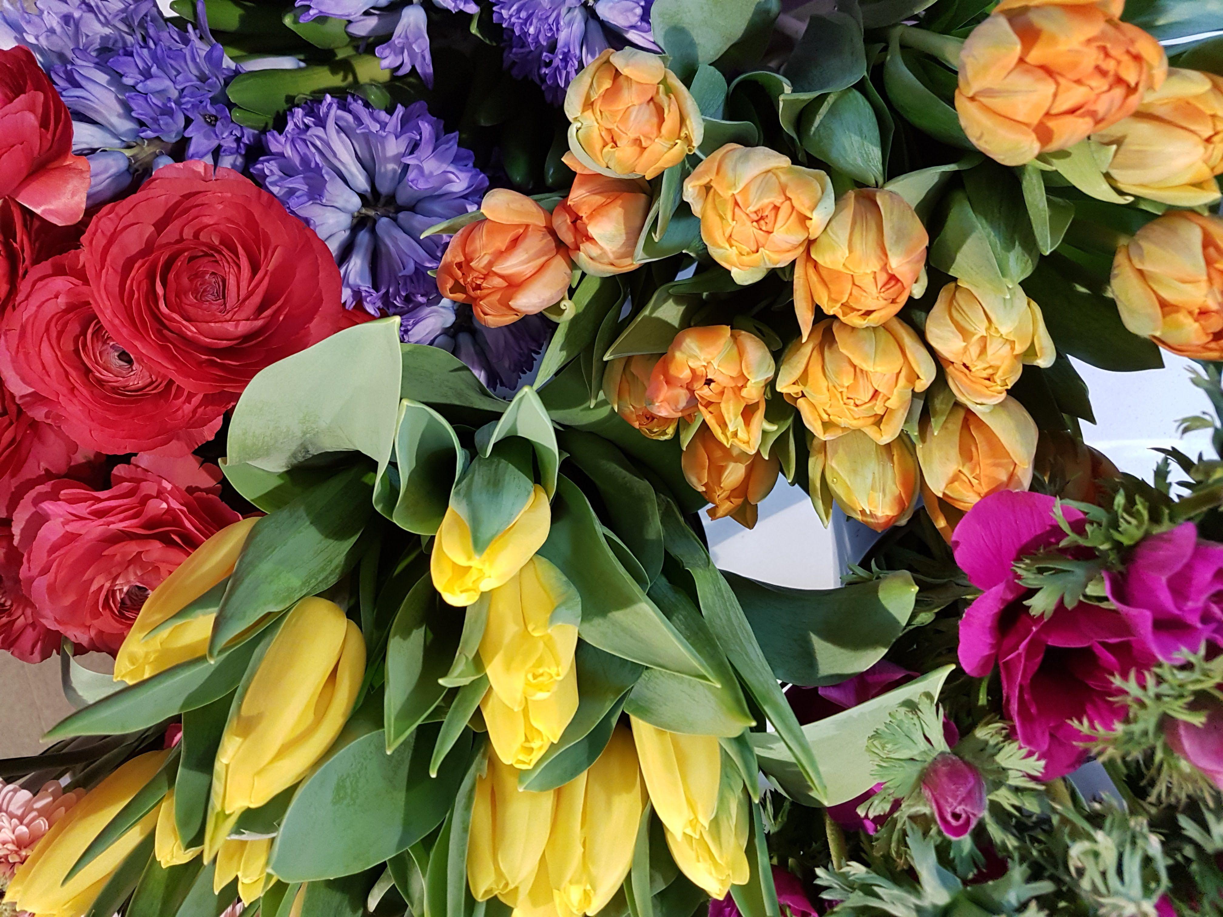 Beet Und Balkonpflanzen Munster Fruhlingsblumen Gartnerei Wagner