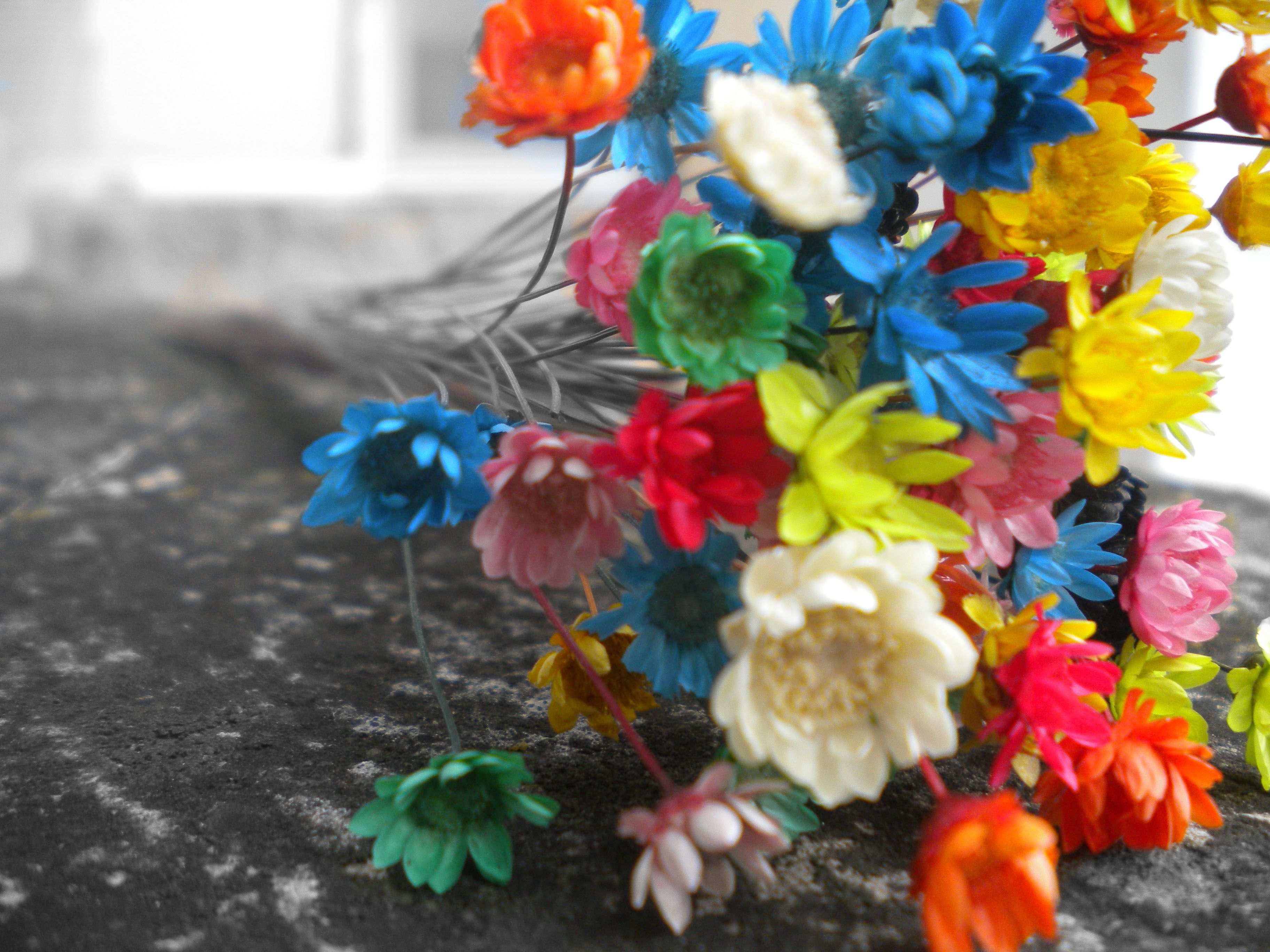 Colourful Flowers Your Popular Hd Wallpaper Id69915 Shared Via