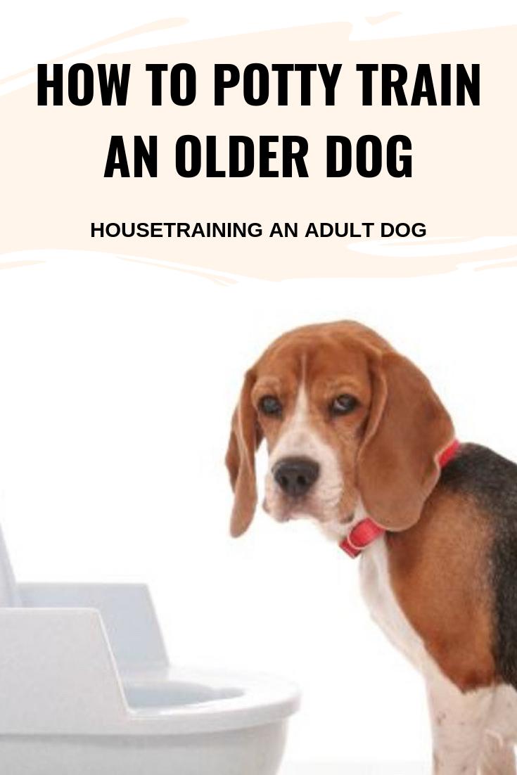 Pin On Dogs Behavior