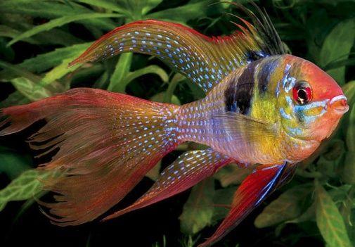 50 Best Tropical Fishes For Your Aquarium Aquarium Fish