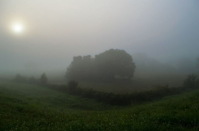 Early Morning Fog #1 by Cutte