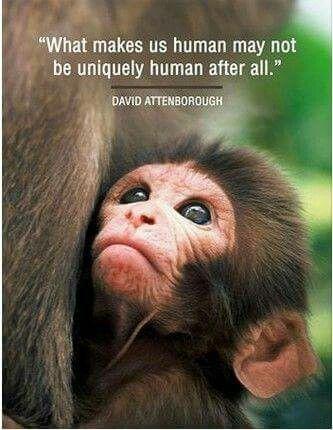 David Attenborough Human Animal Quotes Save Earth